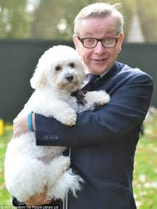 second of puppy michael gove s snowy comes second in westminster pets contest test daily mail