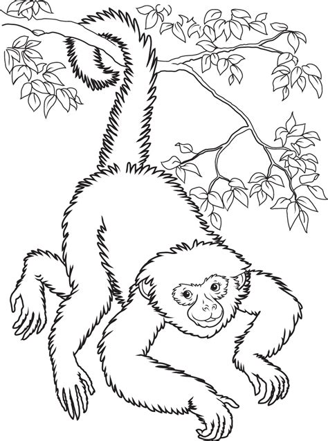 coloring page spider monkey spider monkey coloring sheets coloring pages monkey