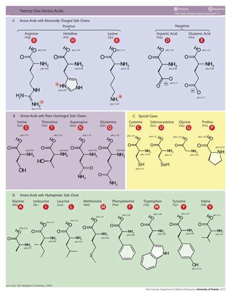 proteinogenic amino acid