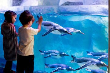 Lu Aquarium Malaysia sea aquarium skip the line admission ticket 2018