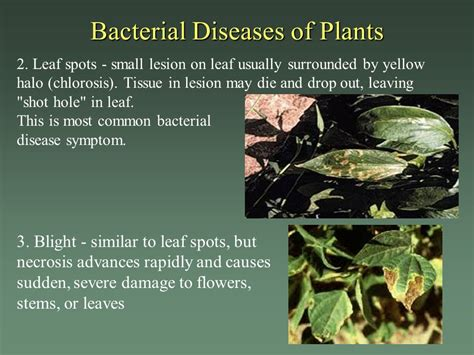 microbial diseases in plants where do bacteria come from ppt