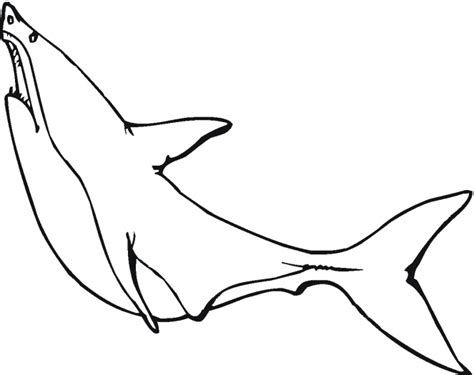 shark outline coloring page outline of a shark clipart best