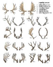 antler tattoo behind ear meaning 345 best cervidae images on pinterest deer animal