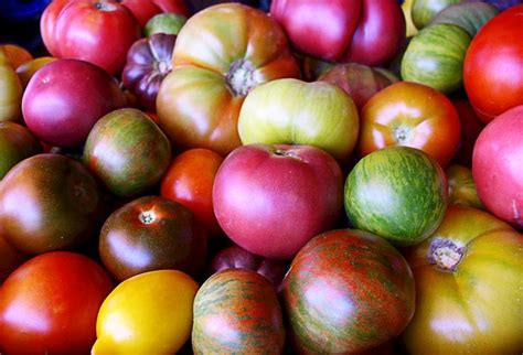 Green Multicolour Tomato T1310 1 17 best images about grapes on alibaba vineyard and grape juice
