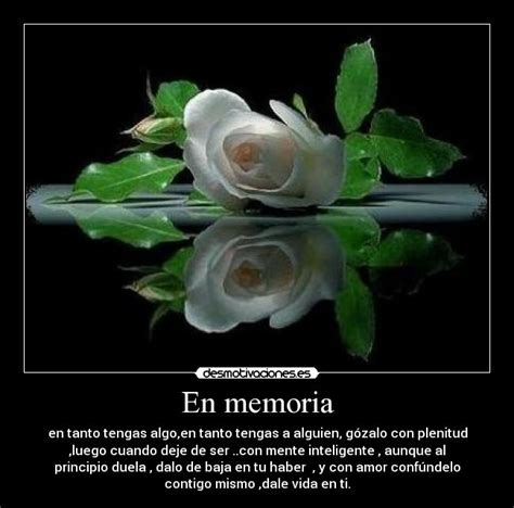 imagenes de luto rosas rosa blanca de luto con frases imagui