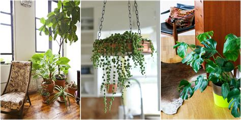 good inside plants 15 best indoor plants good inside plants for small space