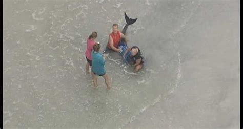 baby shark attack baby whale dies after florida shark attack canada