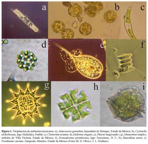 flos lade catalogo biodiversidad fitoplancton de aguas continentales en