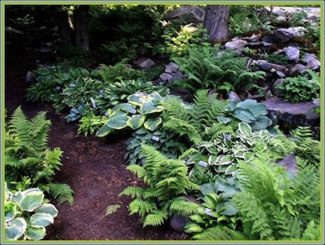 Fern Garden Ideas Shade Garden Ferns And Hostas Gardens Ideas Vermont Flower Pre Gardening Pinterest
