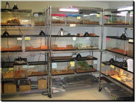 Reptile Rooms by Reptile Room Nitroboi6