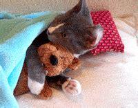 convertidor de imagenes jpg a gif gratis gif animados de gatos descargar gratis