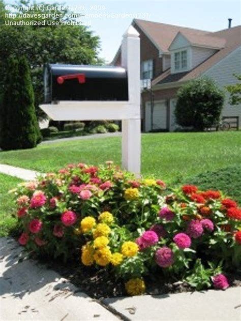 Mailbox Garden Ideas Beginner Gardening Ideas For A Mailbox