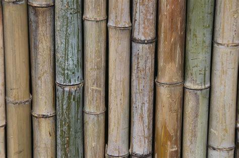 6 id 233 es pour d 233 corer avec du bambou 7 233