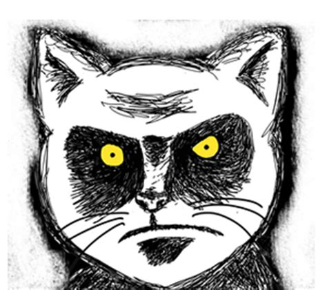 Glaring Meme - graphics for facebook cover 187 angry cat glare meme comic face
