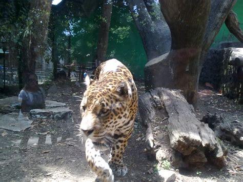 giardino zoologico di pistoia zoo di pistoia orario e biglietti toscana in