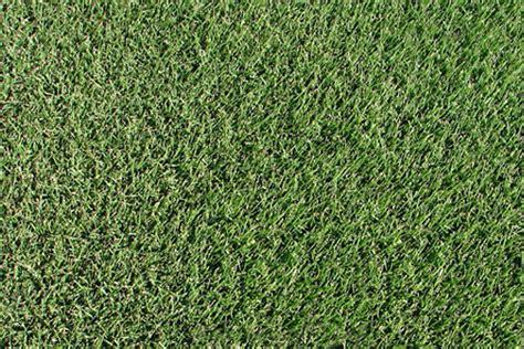 Soft Grass zoysia zoysia japonica mata turf