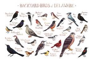 Backyard Birds Of Indiana Backyard Birds Of The United States The Little Nuthatch