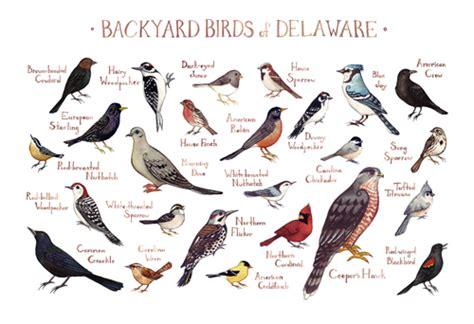 backyard birds of virginia backyard birds of the united states the little nuthatch