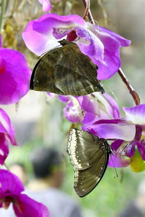 casa delle farfalle casa delle farfalle un magico mondo nel parco dell appia