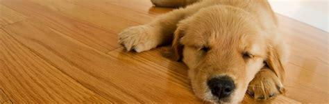 hardwood floors and dogs flooring ideas home