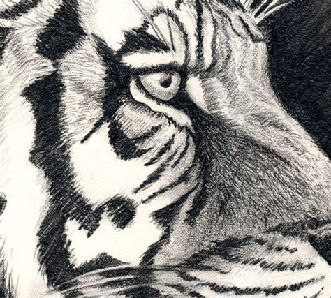 image maker tiger graphite drawing