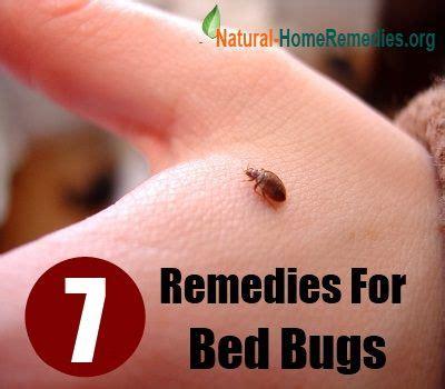 ideas  bed bug bites treatment  pinterest bug bite treatment dust allergy