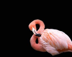 flamingo rubber st birds photographs for sale page 3 of 278