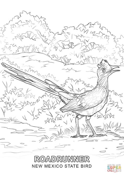new coloring pages new mexico state bird coloring page free printable