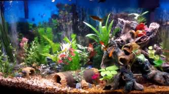 Best Fish Tank Aquarium I Ever Created   Beautiful   YouTube