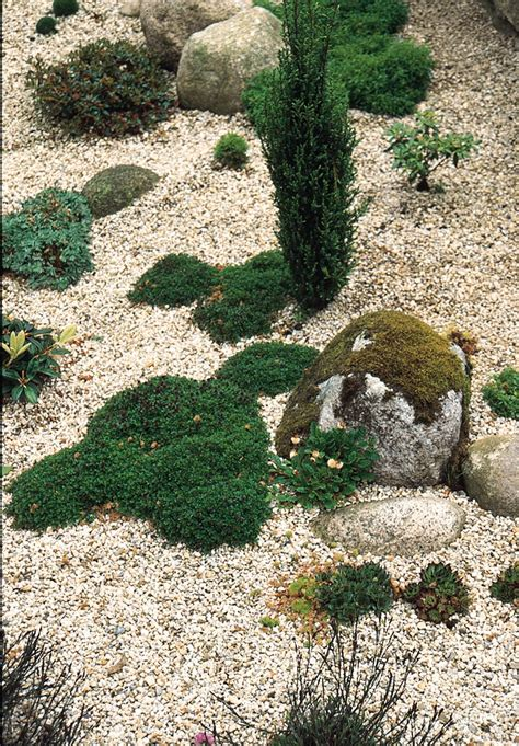 Creating A Scree Garden Rocks Stone And Gravel In The Rocks For The Garden