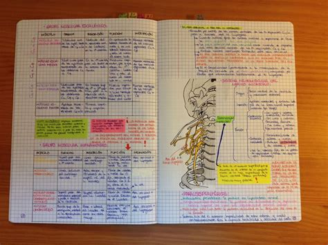 Pdf Best Way To Study Medicine by Anatomy Notes For Students Pdf At Best Anatomy Learn
