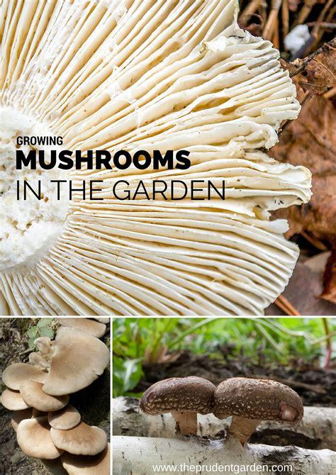 Growing Mushrooms In The Garden Mushrooms In Vegetable Garden