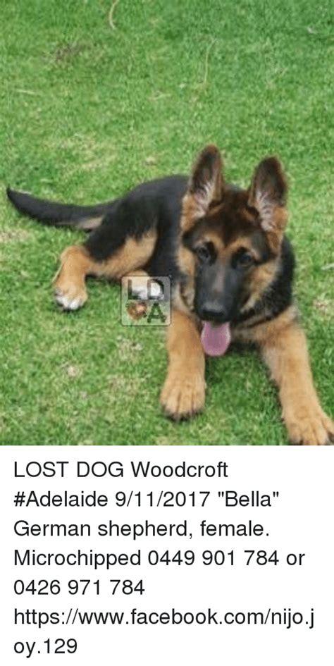 Lost Dog Meme - lost dog woodcroft adelaide 9112017 bella german shepherd