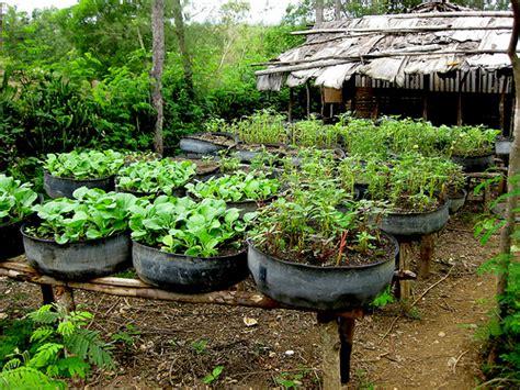 Haiti: Tire gardens   Recycled tire gardens. UUSC UUA