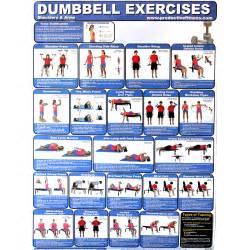 dumbbell exercises at home myideasbedroom