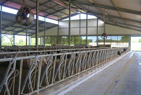 capannoni it capannoni prefabbricati per bovini da latte 1 miglioranza