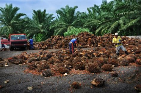 alimenti contenenti silicio liberi dall olio di palma fattiamano