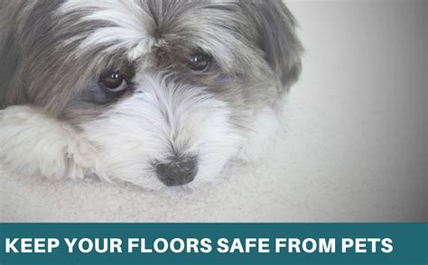 keeping your floors safe from pets jabro carpet one
