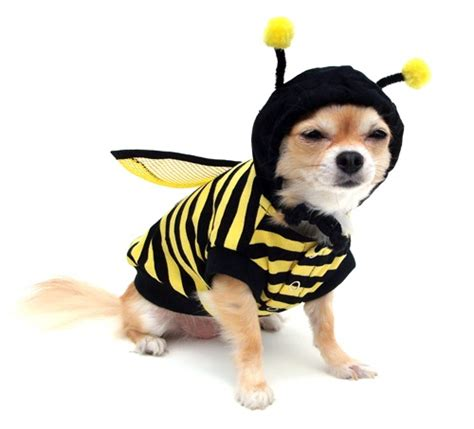 bumble bee costume for dogs cat bumble bee costume adorable bees for tina