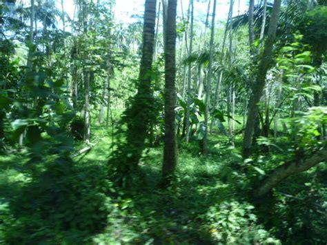 lada rotante hutan bahasa indonesia ensiklopedia bebas