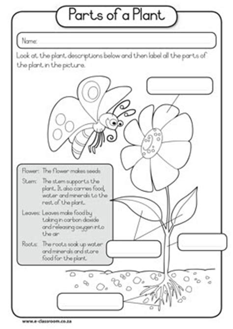 why are plants green worksheet 7 2 kindergarten science learning outcomes march 2013