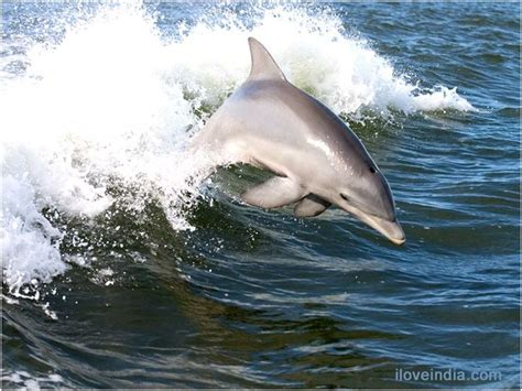 secrets the dolphin smile 25 amazing things dolphins do books best 25 facts about dolphins ideas on