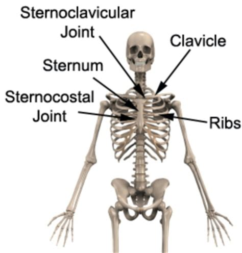 clavicle pain bench press sternoclavicular joint sprain sc joint sprain