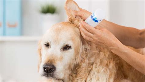 ear wash for dogs how to make ear cleaner