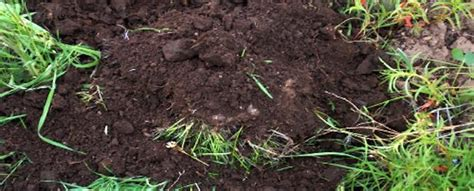types of garden soil ten ways to improve your soil