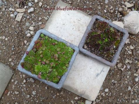 Can You Use Styrofoam In Planters by Faux Hypertufa Painted Styrofoam Troughs For The Lightweights