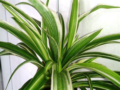 20 most common house plants 5 of the best plants for your indoor garden