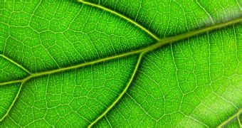 How Algorithm Updates Shape The All Leaf Shapes May Be Inscribed In A Single Algorithm