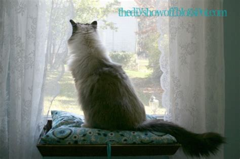 cat seat for window diy how to make a cat window perchdiy show diy