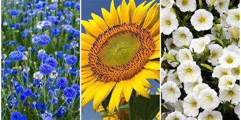 fastest growing flower seeds   summer garden